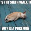 pokemon go dog
